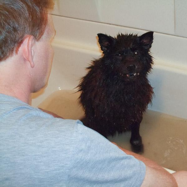 Frank Miles gives his dog a bath